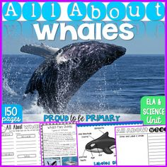 In zoology, do you study whales and dolphins?