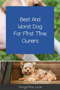 Are you wondering about the best and worst dogs for first-time owners?    While all dogs make lovely pets, some sensitive breeds or hard to train ones can be a handful for an inexperienced dog owner. Best Large Dog Breeds, Best Small Dogs, Most Popular Dog Breeds, Best Dog Breeds, Best Dogs, All About Puppies, Best Guard Dogs, Companion Dog, Puppy Chow