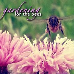 There's a huge variety of herbs that are not just great for cooking and medicinal purposes, they're great for bees.  And planting herbs that attract honey bees is something that <em>anyone</em> can do.
