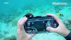 Taking underwater photos with your iPhone just got way easier. https://video.buffer.com/v/5a338b1b936392481d6a24de