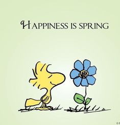 Happiness is spring Snoopy Peanuts Quotes, Snoopy Quotes, Peanuts Cartoon, Peanuts Snoopy, Peanuts Comics, Snoopy Love, Snoopy And Woodstock, Images Snoopy, Charlie Brown And Snoopy