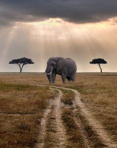 Road Through Mara By Merlune On Flickr.