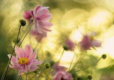 Danceoftheflowers