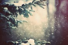 nature-forest-trees-pine-branches-snow-weather-winter-wallpapers.jpg (immagine JPEG, 1920 × 1278 pixel)