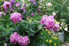 Mon Jardin Mes Merveilles: Petit tour du propriétaire