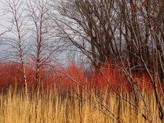 November at the Prairie Garden
