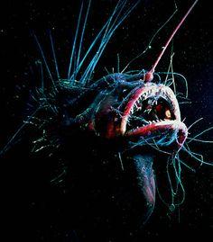 Angler Fish. Natures intense