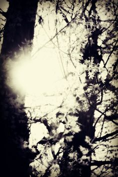 Sun streaming behind trees illuminating small, white leafs in Forest Park. Brittany Rose Photography