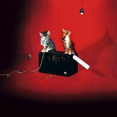 The White Stripes Album Cover The white stri