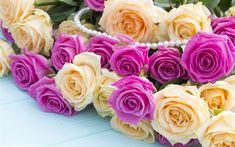 Download wallpapers pink roses, beautiful flowers, purple roses, beautiful bouquet, roses