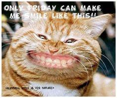 Thank you so much funny. Thank you so much funny images. Thank you so much funny meme. Thank you so much funny. Thank you so much funny gif. Thank you so much funny image. Thank you so much funny gif. I Love Cats, Cute Cats, Funny Cats, Funny Animals, Cute Animals, Crazy Cat Lady, Crazy Cats, Bad Cats, Chat Web
