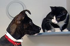 Introducing Your Cat to a New Dog