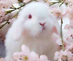 ideas pet bunny ideas easter for 2019 Cute Baby Bunnies, Cute Babies, Fluffy Bunny, White Rabbits, Bunny Rabbits, Pet Rabbit, Rabbit Pen, Cute Little Animals, Fine Art