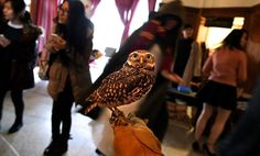 Live owls were on display during A Night at Hogwarts 2015 at Risley Hall on the Cornell University campus in Ithaca, N.Y., Friday, April 10, 2015.