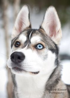 Tori the Dog.