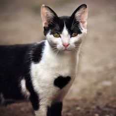 Lovely cat | Funny & Cute Cat Pictures