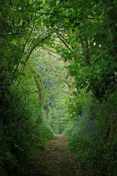 High Banks Lane between Maenporth & Mawnan Smith, Cornwall ....