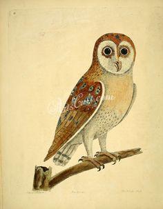 White Owl      ...