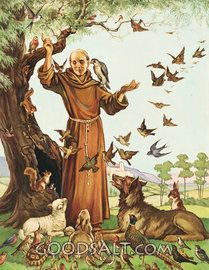 Afbeeldingsresultaat voor St Francis of Assisi photos Francis Of Assisi, St Francis, Catholic Saints, Patron Saints, Patron Saint Of Animals, Religion, Amor Animal, All About Animals, Angels In Heaven