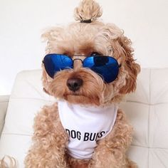 It's Time For You to Play Man Buns vs. Dog Buns These are so funny! Plus the man bun is probably one of the stupidest looks I've ever seen on a guy.