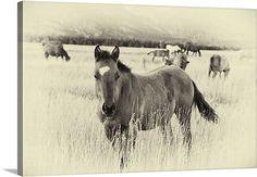 Western Horse Photo by Scott Stulberg on Great Big Canvas