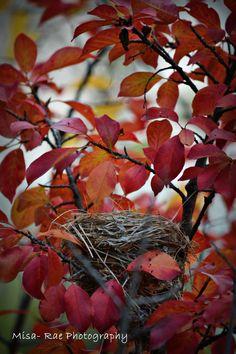 A cute little nest I found. <3
