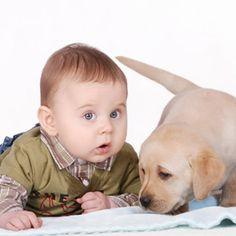 11 tips for when dog meets baby.