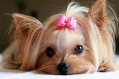 ok who put a pink bow on top of my head, what will the guys think when they see me?