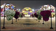 #dubaimiraclegarden Garden Soil, Garden Seeds, Dubai Garden, Miracle Garden, Palm Beach Gardens, Garden Stones, Urban Landscape, Container Gardening, Diy Home Decor