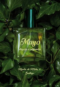 #parfum #cologne #beaty #green #coralia #mirandapriestly #santiagodecompostela #galicia Miranda Priestly, Cologne, Perfume Bottles, Green, Beauty, Santiago De Compostela, Perfume Bottle, Cosmetology