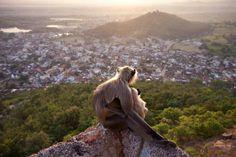 Natura selvaggia, le 5 foto più belle del Veolia Environnement Wildlife Photographer of the Year 2010 - Focus.it