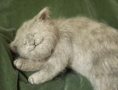 #Sleeping cat  Like,Repin,Share, Thanks!