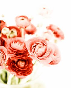 #Ranunculus may be hard to say, but it's #beautiful to look at! #bloom