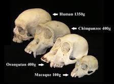 Resultado de imagem para antropologia