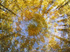Sugar Maple Trees Display Autumn Foliage Photographic Print by John Eastcott & Yva Momatiuk at Art.com