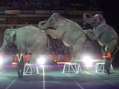 Elephants at the Ringling Bros and Barnum and Bailey Circus, BJCC Arena. By @Erin Street.