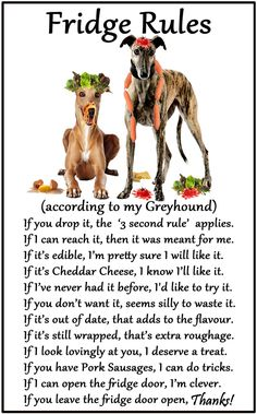 fridge rules according to Dog