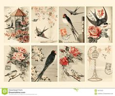 vintage+pictures | Jogo da folha da colagem do pássaro do estilo de oito vintages dos ...