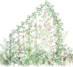 / Junya Ishigami. via the fox is black #illustration #plants