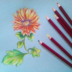 Hi friends! I got a chance to play some more with the new Colourblend Colored pencils from Spectrum Noir this weekend and I drew a fall flower. I wanted to use them a bit before I formed an opinion… Watercolor Pencils Techniques, Colored Pencil Techniques, Christmas Flowers, Fall Flowers, Spectrum Noir Pencils, The Frugal Crafter, Watercolor Art Diy, Colouring Techniques, Color Pencil Art