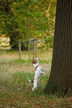Is Your Company Barking up the Right Charity Fundraising Tree?