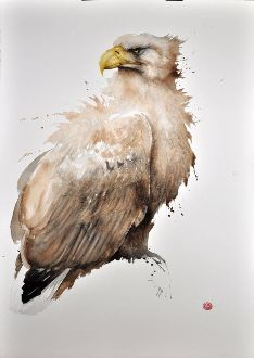 Sea Eagle #2 - Karl Mårtens - watercolor