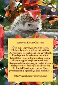 Őszi vers Kindergarten Projects, Teaching Tips, Kids And Parenting, Diy And Crafts, Education, Seasons Of The Year, Hedgehogs, School, Creative