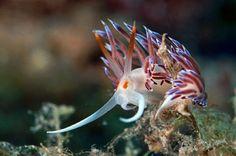 NUDIBRANCH | Beautiful Undersea Creepy Crawlies by Mariecor Agravante — Medium