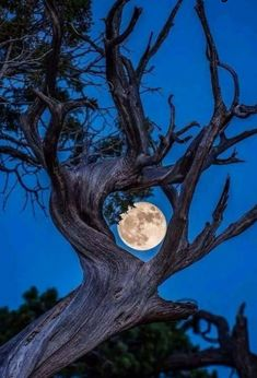 Nature-Framed Moon in Grand Canyon National Park Moon Photos, Moon Pictures, Nature Pictures, Beautiful Pictures, Moon Moon, Moon Art, Blue Moon, Shoot The Moon, Moon Photography