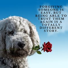 Law Of Attraction ( Dog Quotes, Motivation, How Beautiful, Law Of Attraction, Self Help, Quote Of The Day, Positive Quotes, Quotations, Photo And Video