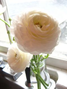 white ranunculus - such an unlikely name for such a delicate flower! Wedding Bouquets, Wedding Flowers, Bridesmaid Bouquets, Fresh Flowers, Beautiful Flowers, White Ranunculus, Dream Wedding, Wedding Fun, Wedding Stuff