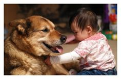 When we expose children to pets when they are infants, we may be helping reduce their risk of childhood allergies and obesity.