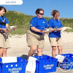 It's all smiles as the SeaWorld rescue crew prepares to return three sea turtles back to the wild. #365DaysOfRescue
