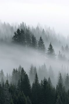 Ideas Winter Landscape Forest Travel For 2019 Winter Photography, Landscape Photography, Nature Photography, Photography Puns, Photography Studios, Landscape Photos, Travel Photography, Misty Forest, Dark Forest